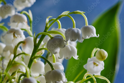 Fotobehang Lelietjes van dalen Detail of a white flower lily of the valley.