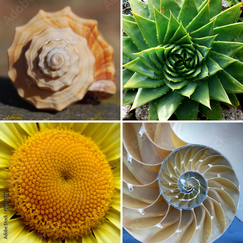 Poster Beautiful Golden Ratio Spirals in Nature