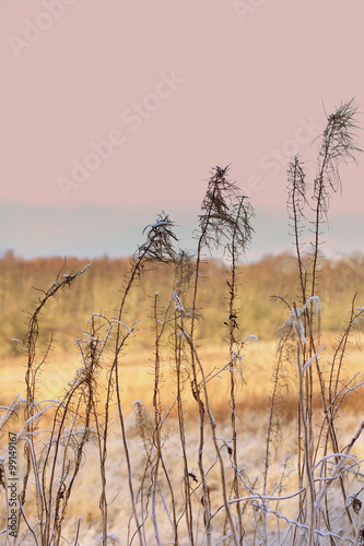 Winter background of frosty grass at the sunset © JulietPhotography