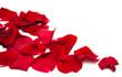 Red roses petals