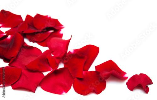 Zdjęcia na płótnie, fototapety, obrazy : Red roses petals