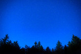 Dark blue night pine trees over sky