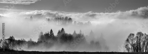 morning fog and a forest - 99185135