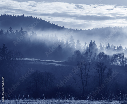 morning fog and a forest - 99185394