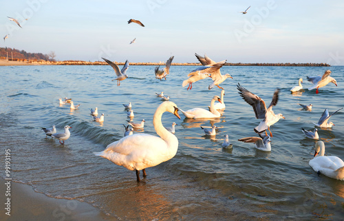 Fotobehang Birds swans white and seagulls on the shore
