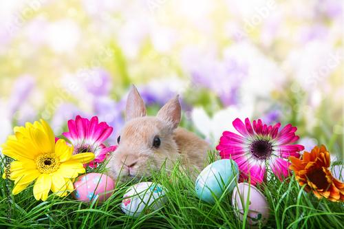 słodki wielkanocny królik