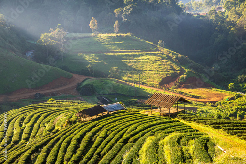 Fotobehang Terrace of tea with the morning mist, at doi angkhang in Chiangm