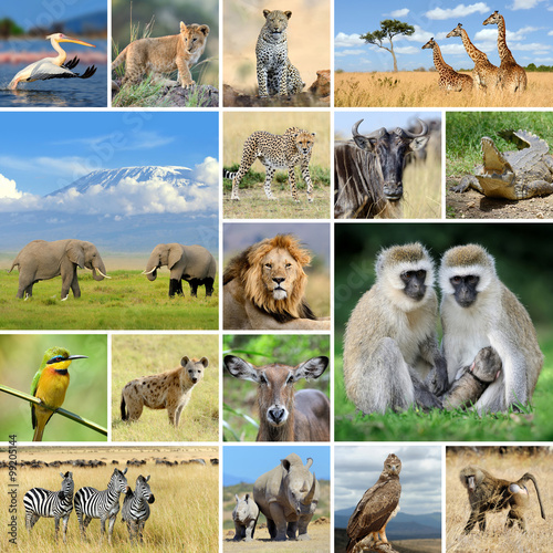 Fotobehang Vlinder Collage with photo african animals