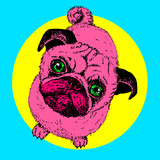 Fototapety Pug dog pop art, vector hand drawn sketch with cute domestic animal