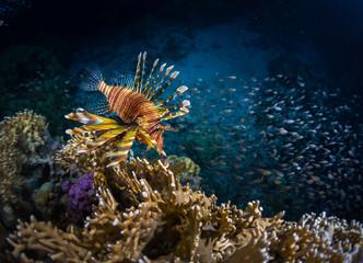 Ryby z koralem