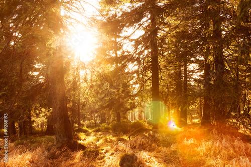 Aluminium Betoverde Bos Gegenlicht im Harz