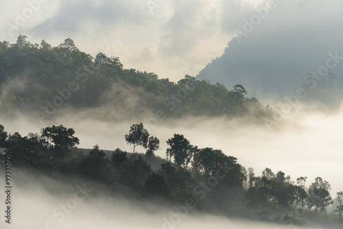 A high hill forest in foggy atmosphere - 99303715
