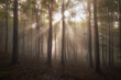 sun rays in forest in the morning