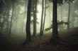 misty green forest