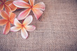 Plumeria Frangipani flower copy space background, selective focus, toning