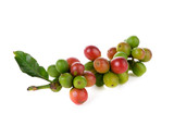 Coffee cherry isolate on white background - 99385138