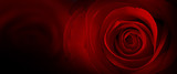 red roses flower background