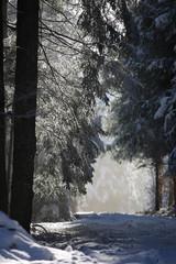 Zima w czarnym lesie