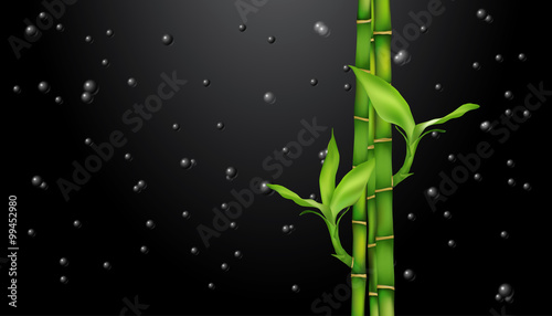 Bamboo on black. drops on black. vector.