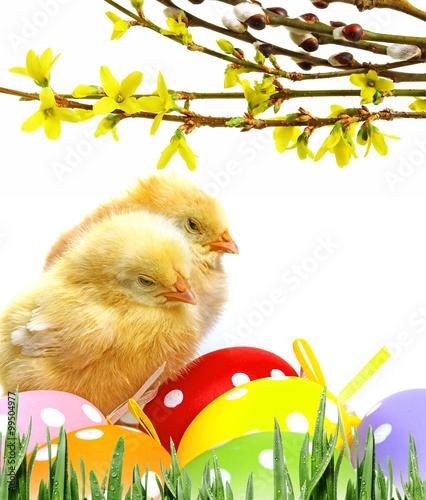 Fototapeta newborn chickens and easter eggs