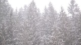 Beautiful countryside forest trees winter scene with snowfall.