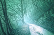 Magical foggy green color light in mystic forest with road.