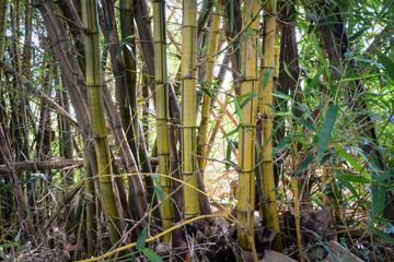 Bamboo © POKPAK