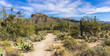 Sabino Canyon Desert in Tucson, Arizona