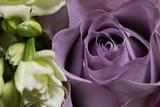 Mauve Rose - 99694730