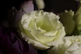 Pure Delight - 99694913