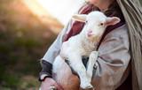 Lamb - 99695303