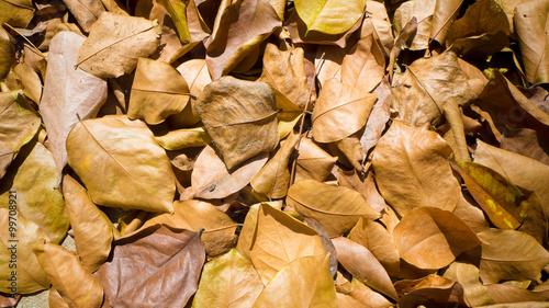 Dry leaf on the floor.