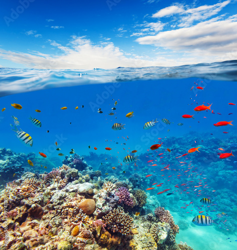 Obraz na Szkle Underwater coral reef with horizon and water waves