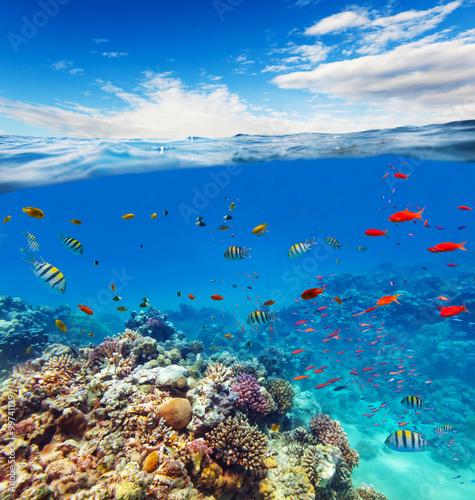 Fototapeta Underwater coral reef with horizon and water waves