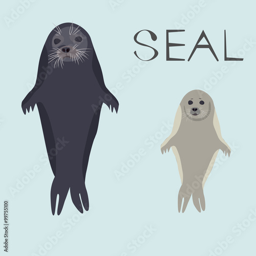 sea calf. Realistic seal with baby. Vector illustration - 99755100