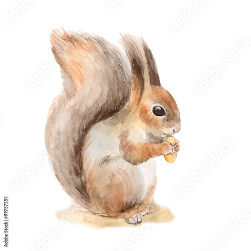 Squirrel with a nut. Hand drawn. Watercolor illustration in vector. - 99757351