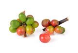 Fototapety Coffee cherry isolate on white background