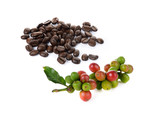 coffee berry and coffee beans on white background - 99794111