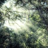 Summer forest jungle - 99814574