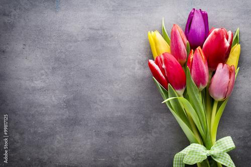 Fototapety, obrazy : Tulips on the grey background.