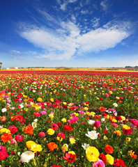 Spring flowering © Kushnirov Avraham