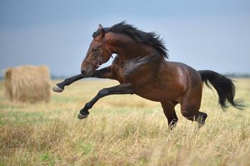 Лошадь в полях