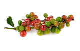 Coffee cherry isolate on white background - 99828336