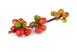 Coffee cherry isolate on white background - 99828356