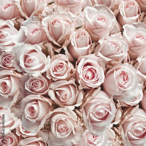 Zdjęcia na płótnie, fototapety, obrazy : Pink vintage roses
