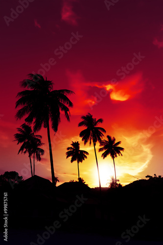 Foto op Canvas Baksteen Palm tree sunset on tropical beach of Hawaii islands