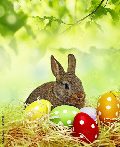 Fototapeta a little baby rabbit