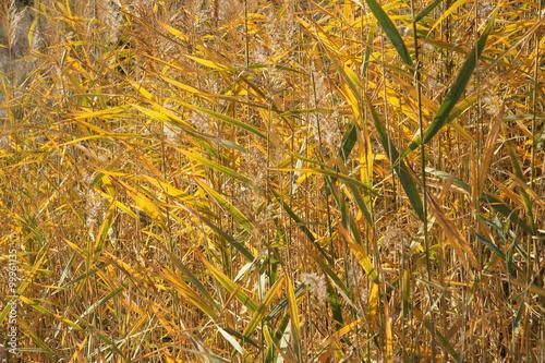 Obraz na Szkle autumn cane