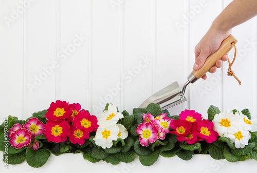 Gartenarbeit im Frühling Canvas Print