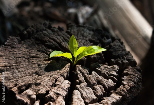 plant growing out of a tree stump